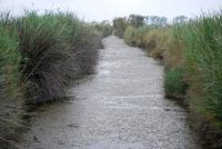 Canal d'irrigation ( roubine ) - Albaron