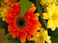 Gerbera orange - Le Cannet