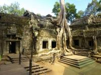 Temple Ta Prohm envahi par la jungle - Angkor