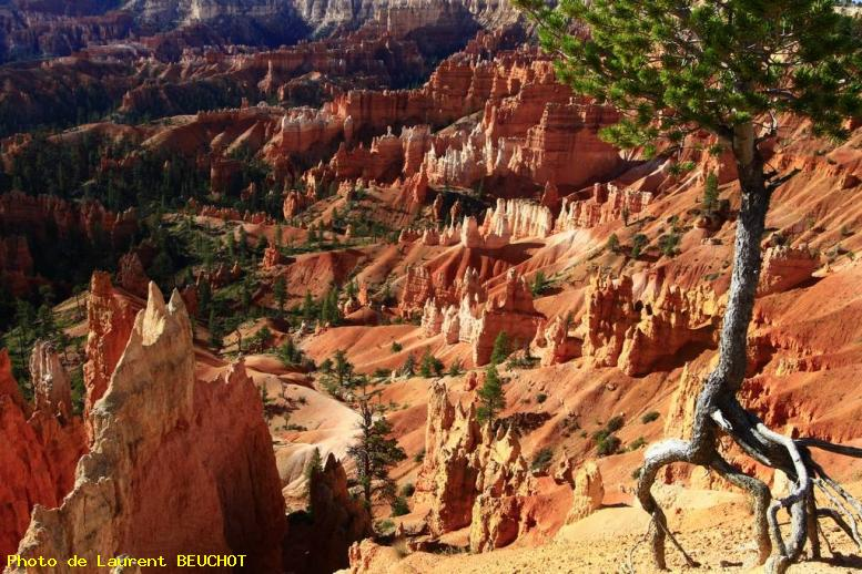 ZOOM : Bryce canyon - Bryce canyon