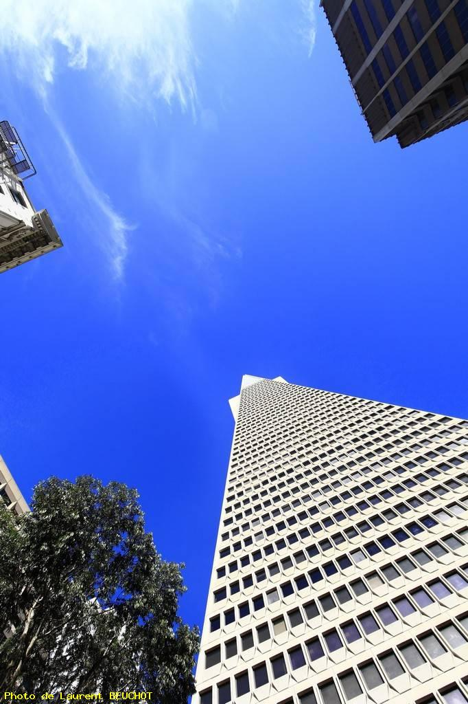 Transamerica tower - San francisco