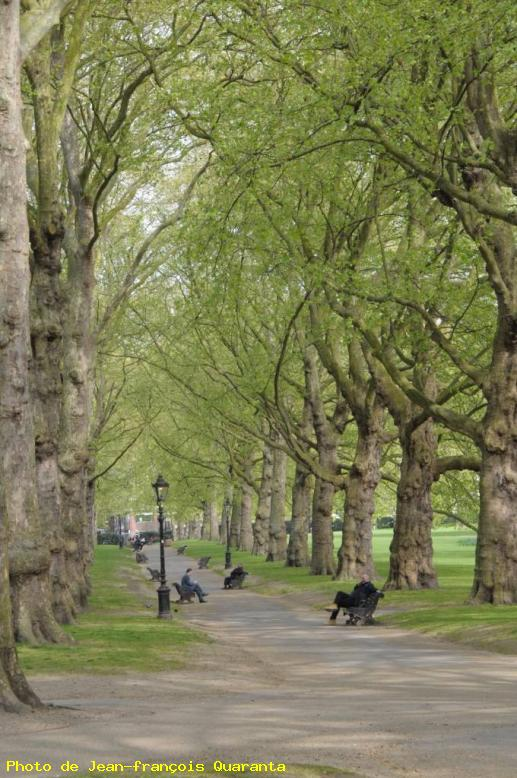 ZOOM : Green park - Londres