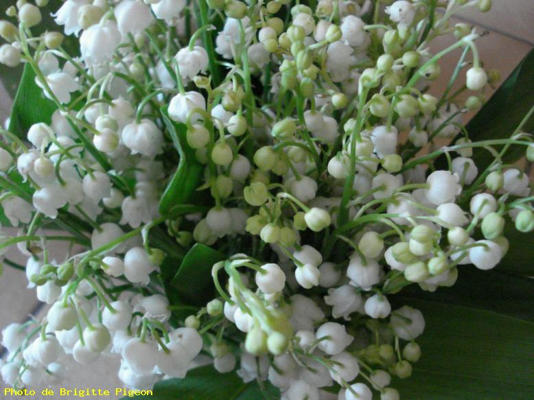 Photo bouquet de muguet mont sous vaudrey ref 6864 - Bouquet de muguet photo ...